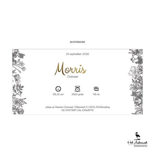 Morris_web-az