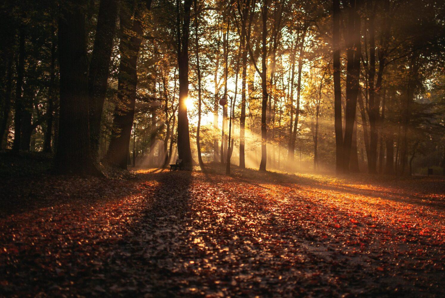 Het Gezinsleven - Uitstapjes - Natuur - De mooiste plekjes van de natuur in Drenthe - Herfst in Drenthe