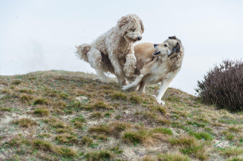 Het Gezinsleven - Uitstapjes - Natuur - Speelbossen - Speelvijvers en speelbossen in Drenthe - Honden spelen in Drenthe