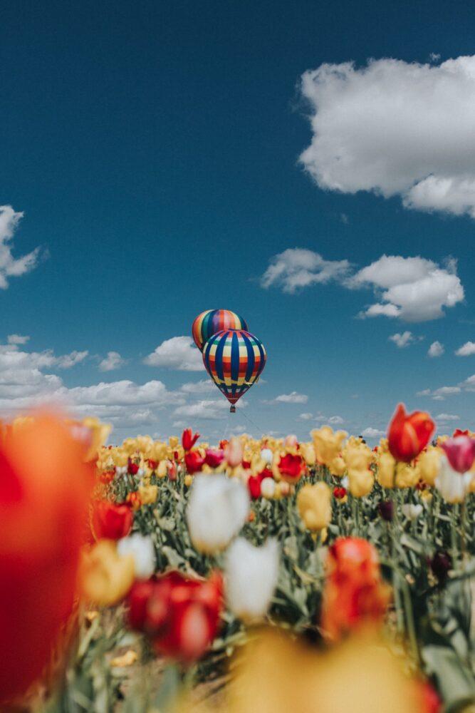 Het Gezinsleven - Uitstapjes - Bezienswaardigheden - De tulpenvelden bezoeken - Ballonvaart boven de tulpenvelden