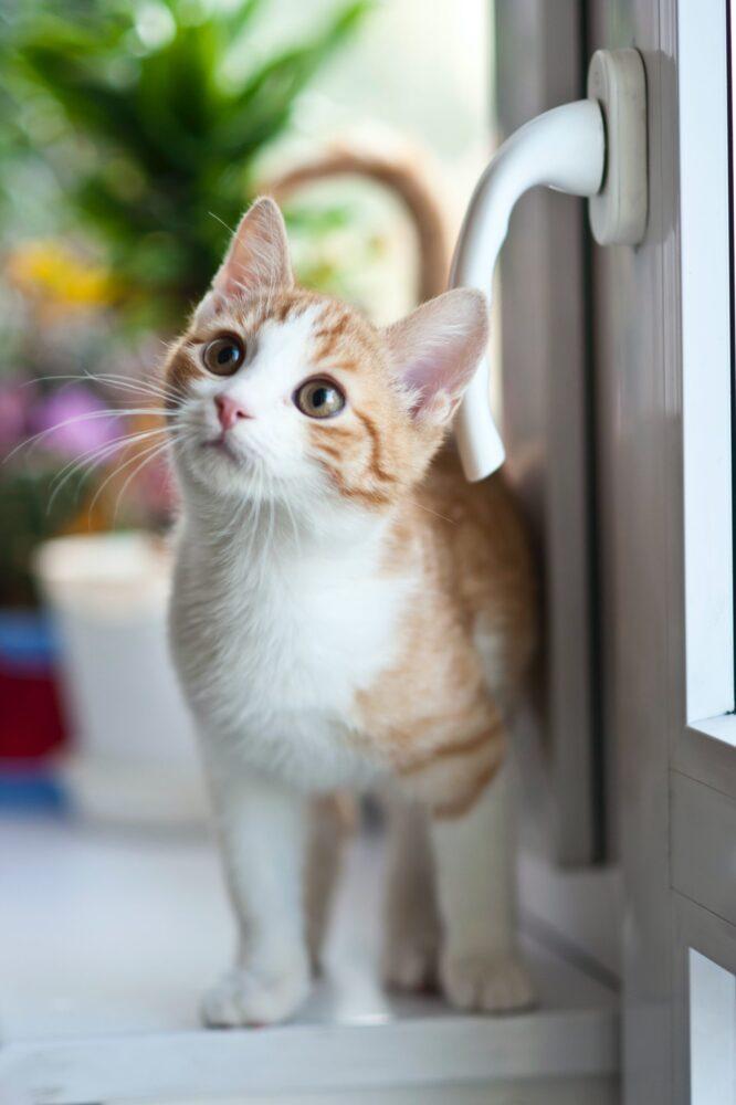 Het Gezinsleven - Lifestyle - Hobby's - Help ik wil een kat kopen! Wat nu? - Nieuwsgierig kijkende kitten