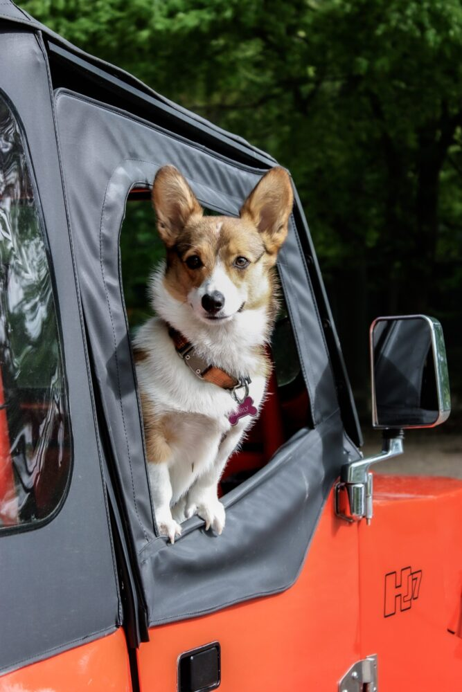 Het Gezinsleven - Lifestyle - Huishouden - Huisdieren - Je hond meenemen op vakantie? Lees hier wat je niet wilt vergeten! - Autorit met je hond