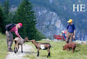 Image result for swiss alps hikers