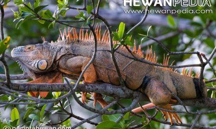 13 Jenis Obat untuk Penyakit Reptil beserta Kegunaan, Dosis, dan Cara Pemakaian