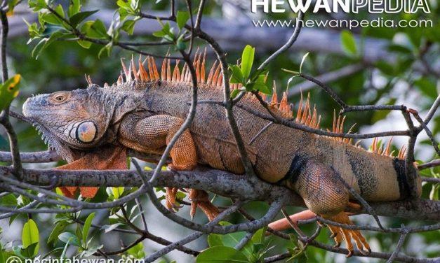 5 Tips Merawat Reptil