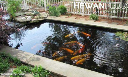 Posisi Kolam Ikan Koi dan Keberuntungan