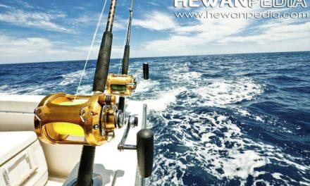Tips Cara memilih lokasi memancing di lautan