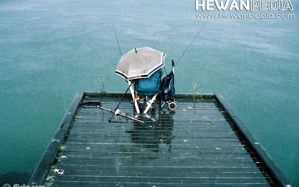 Tips Cara Memancing di Musim Hujan