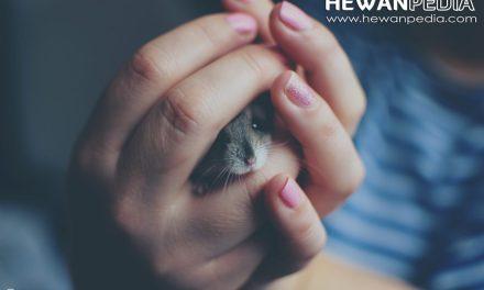 Tips Cara Membuat Kandang Hamster Yang Baik