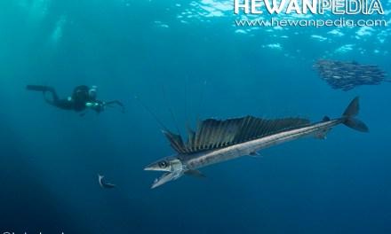 6 Ikan Purba yang Ada di Indonesia