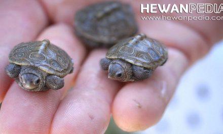 101 Inspirasi Nama untuk Peliharaan Penyu dan Kura-kura Anda
