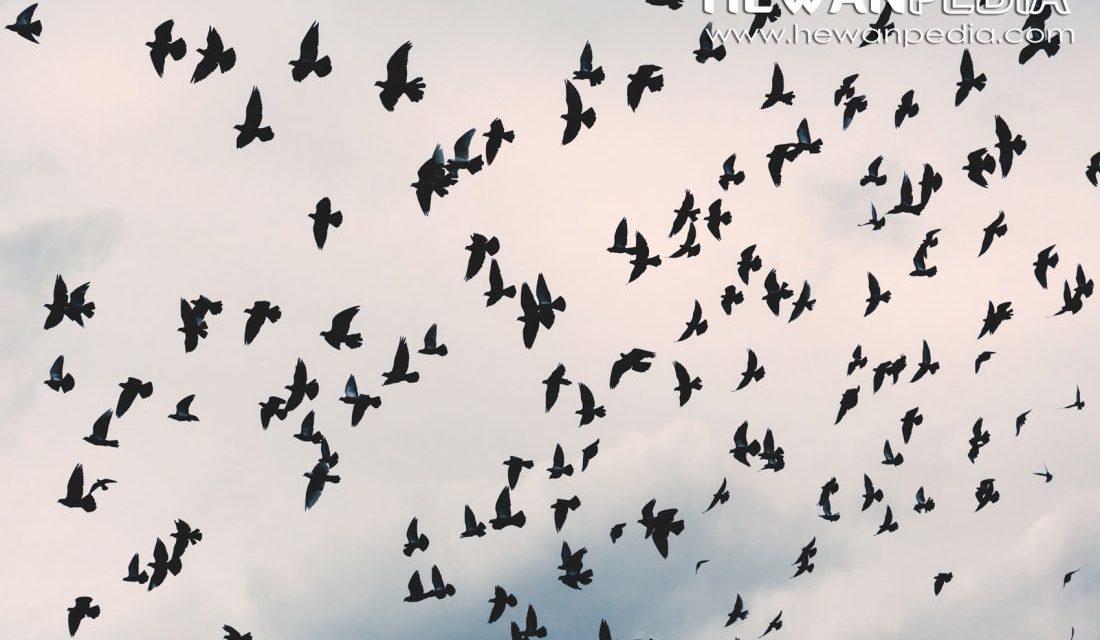 32 Fakta Menarik Mengenai Burung