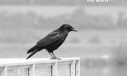 Mitos Hewan-hewan yang di anggap Pembawa Pertanda