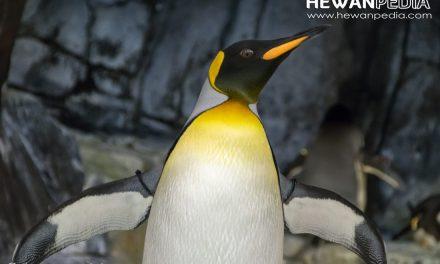 7 Fakta Menarik Mengenai Penguin