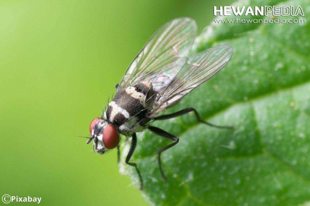 Mengenal Serangga dari Pengertian, Jenis, Ciri Fisik secara Ilmiah
