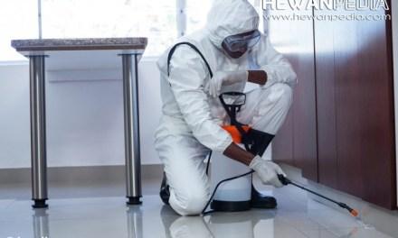 Cara Mengatasi Hama Kecoa, Tikus, dan Cicak di Rumah Anda