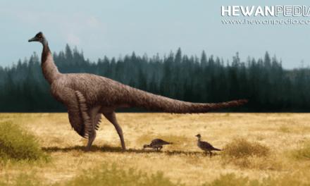 Seberapa Cepat Dinosaurus Bisa Lari ?
