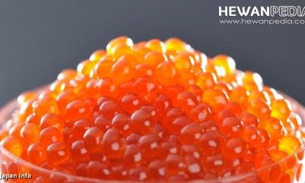 Tabel Kandungan Gizi telur Ikan atau Caviar