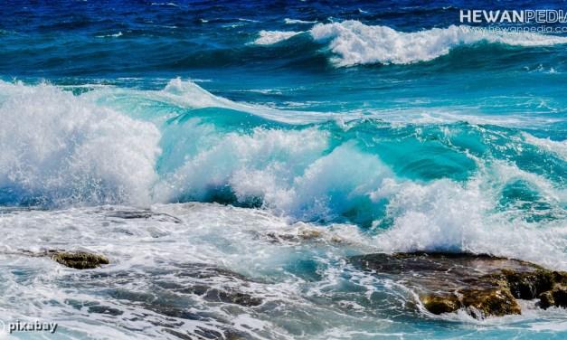 Fakta Mengenai Asin dan Garam di Laut