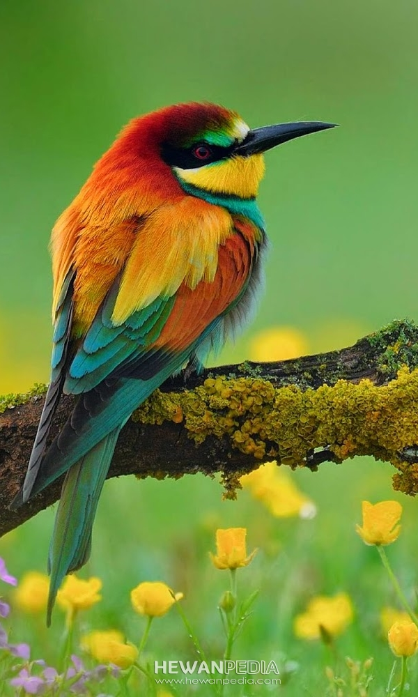 Foto Burung Wallpaper HP HD