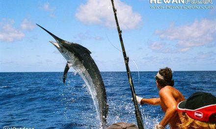 Teknik dan Persiapan Mancing Ikan Marlin