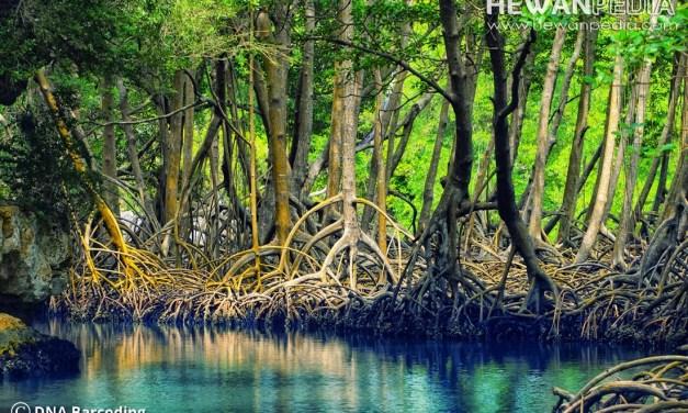 Penjelasan Lengkap Hutan Mangrove atau Bakau