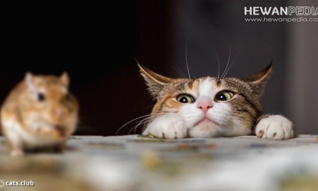 2 Bahaya Jika Kucing Memakan Tikus