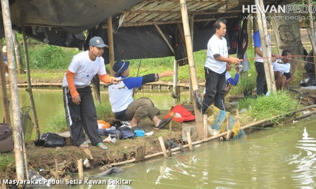 Mengenal Karakter Ikan Mas dan Waktu Memancingnya yang Tepat