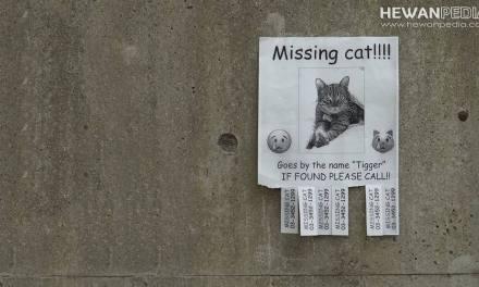 14 Cara Jitu Mencari Kucing Hilang
