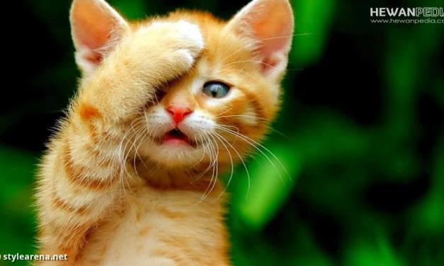 Ingin Kebiri Kucing ? Hukum Islam tentang Kebiri