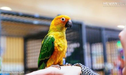 Hukum Memelihara Burung Berkicau menurut Islam