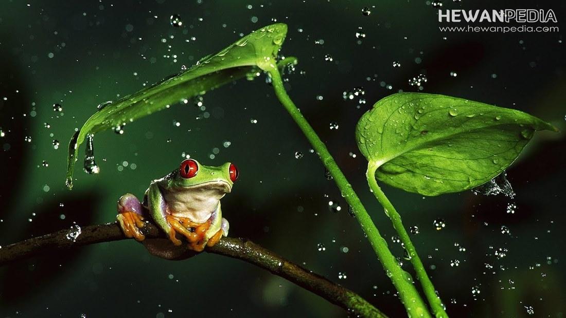 8 Jenis Hewan yang Dapat Meprediksi datangnya Hujan