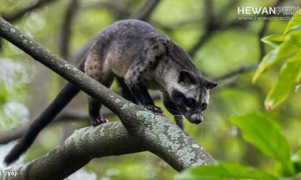 Jenis Flora dan Fauna Endemik Asli Gunung Ungaran