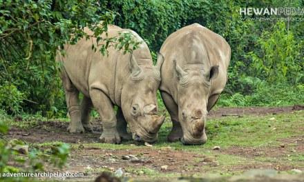12 Taman Nasional di Pulau Jawa serta Flora Fauna yang dilindungi