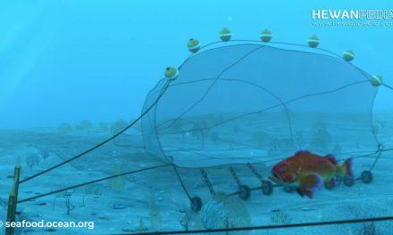 Penjelasan Mancing Bottow Trawling atau Pukat Hela Dasar yang Dilarang Pemerintah