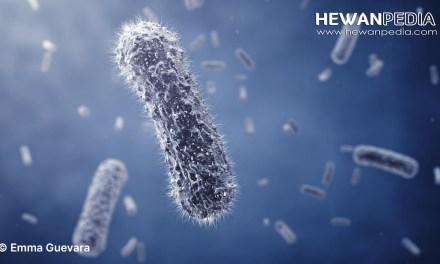 Pengertian Dasar Kuman, Bakteri, dan Jamur secara Biologis