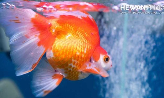 9 Jenis Penyebab Penyakit Pada Ikan dan Cara Mencegahnya