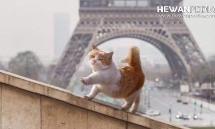 1001 Inspirasi Nama Kucing dari Perancis baik Jantan dan Betina