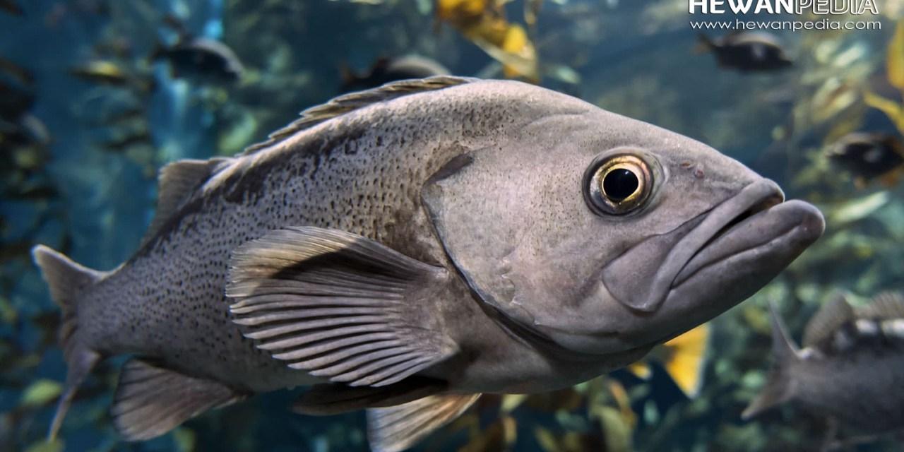 5 Faktor yang Mempengaruhi Aktifitas Ikan dalam Mencari Makan