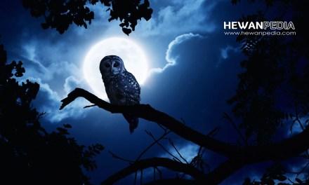 8 Arti Mimpi Melihat dan Menangkap Burung Menurut Tafsir Islam