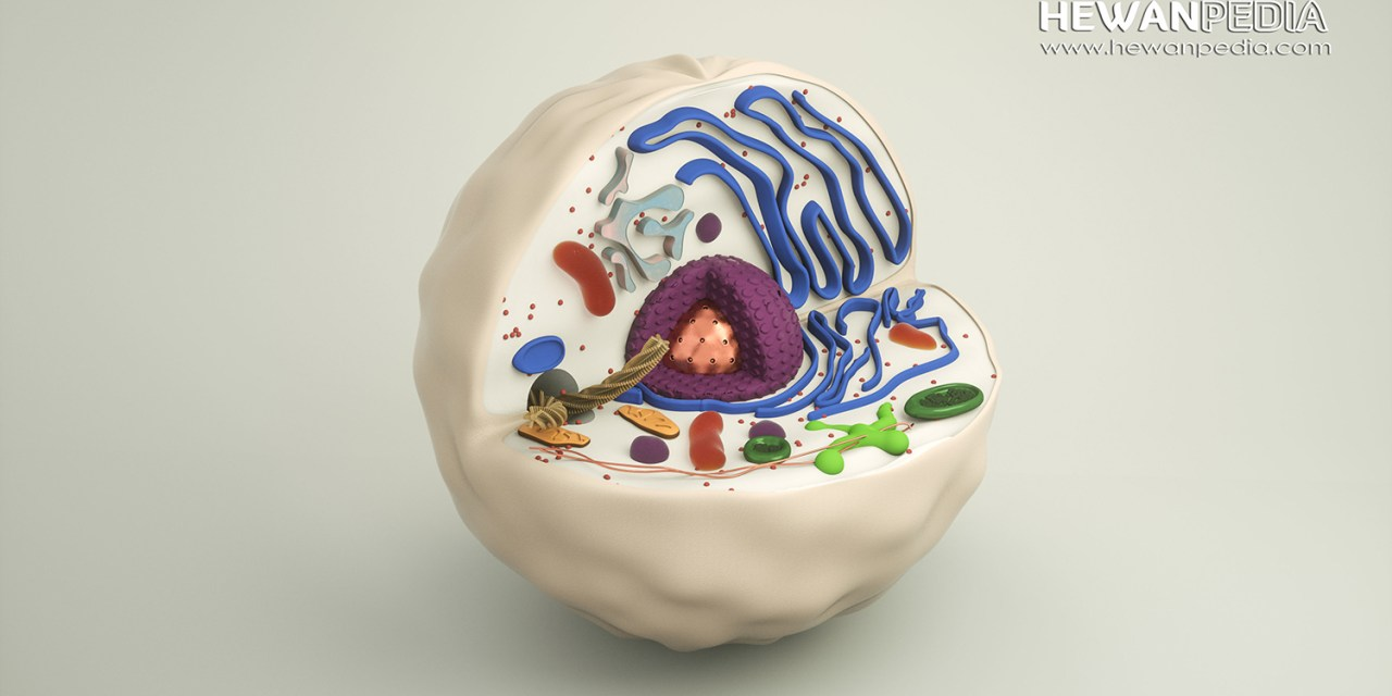 Pejelasan dan Fungsi 11 Organel Sel pada Hewan