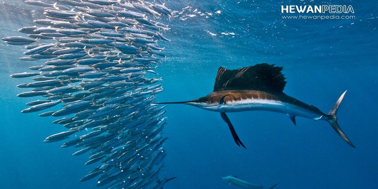 Penjelasan mengenai Ikan Kelas Osteichthyes dan Contohnya