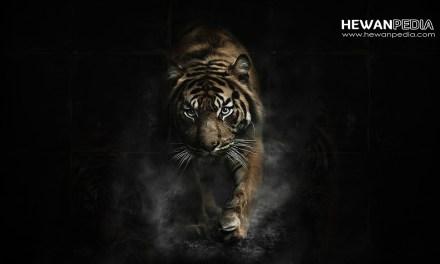 6 Arti Mimpi Harimau menurut Islam dan Al Quran