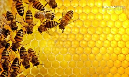 Manfaat dan Keistimewaan Lebah Madu menurut Islam dan Ilmiah