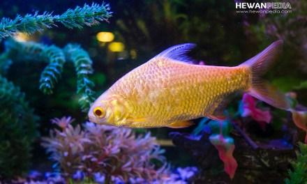 7 Cara Memelihara Ikan Hias agar Sehat dan Bersih