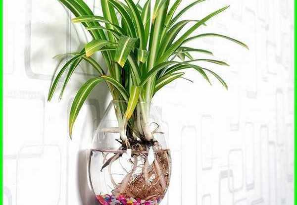 tanaman hias gantung media air di dinding, tanaman gantung media air cantik, tanaman gantung media air indah, tanaman hias indoor gantung, tanaman hias gantung indoor, tanaman hias menggantung, tanaman hias gantung daun, tanaman hias gantung di dinding, tanaman gantung media air, tanaman gantung air