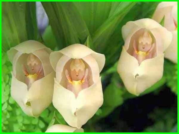 tanaman bunga unik, bunga unik dan langka, bunga unik di dunia, bunga unik di indonesia, bunga paling unik, foto bunga unik, bunga yg unik