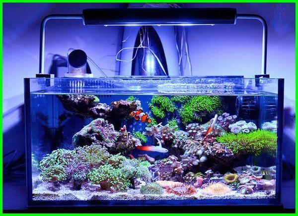 cara bikin aquarium air laut, peralatan aquarium air laut, bikin aquarium air laut, paket aquarium air laut, kadar garam yang baik untuk akuarium air laut, cara bikin air laut untuk aquarium, cara buat air laut untuk aquarium, aquarium air laut minimalis, air laut untuk aquarium, cara membuat air laut buatan untuk akuarium, cara membuat air laut untuk aquarium