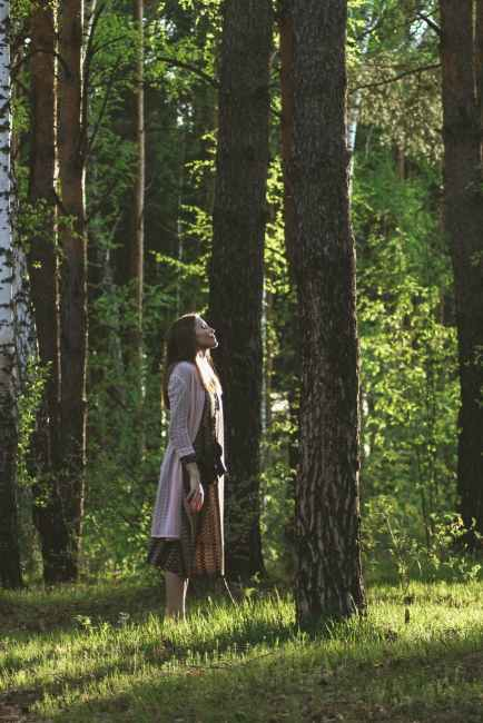Mindfulness and Shinrin Yoku