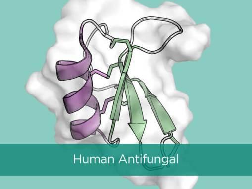 Human Antifungal